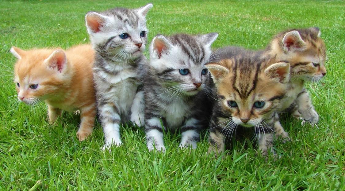 herding cats avoiding scratches